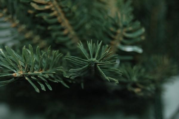 tanne kunst pe tannenbaum weihnachtsbaum baum weihnachten k nstlicher 240cm wald. Black Bedroom Furniture Sets. Home Design Ideas